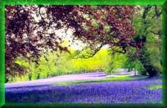 Enys Garden