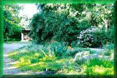 Marsh Villa                 Garden