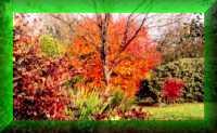 Domineys Gardens