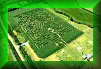 Great Dorset Maize                 Maze