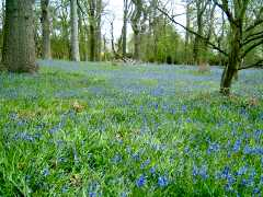 Harcourt Arboretum, Oxfordshire