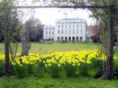 Daffodils, Shotover House Garden