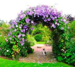 Arch, Gants Mill Garden