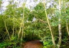 Beacon Wood