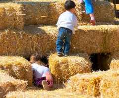 Farmer Gows Activity Farm