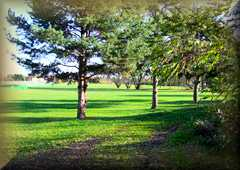 Haling Park